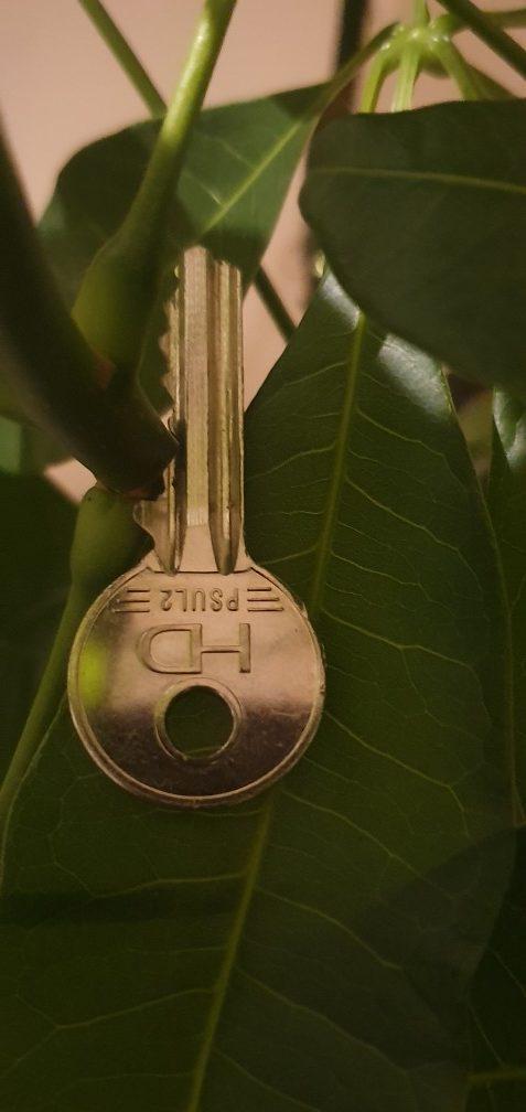 Key on leaves